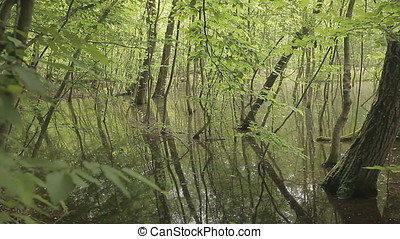 Overgrown Forest Swamp - Overgrown forest swamp.