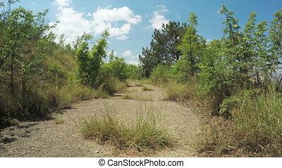 Overgrown grass road