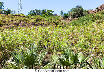 overgrown hill slope in Giardini Naxos town - travel to...