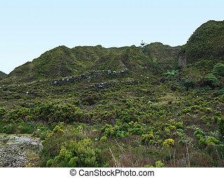 overgrown hills