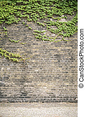 overgrown ivy brick wall with pavement