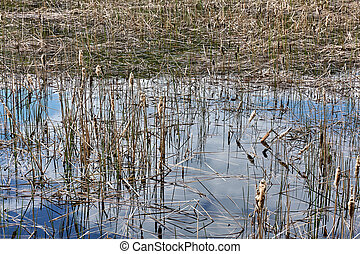 Overgrown lake with reeds and reflection of sky