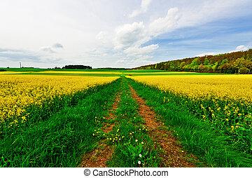Overgrown Dirt Road Between Fields of Alfalfa in Germany