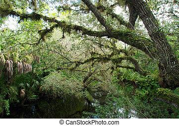 Overgrown swampy river