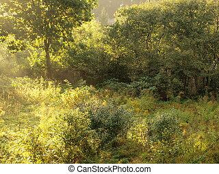overgrowth, közül, bokrok, alatt, napvilág