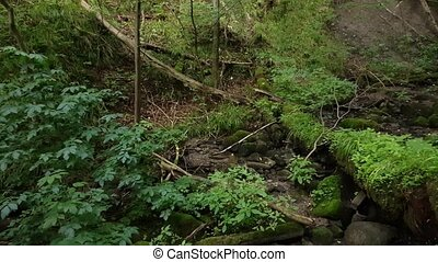 overgrowth ravine in the forest