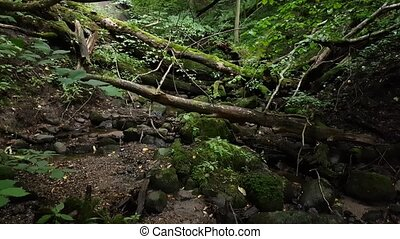 overgrowth ravine in the forest - Ravine in the forest...