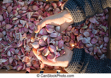 Overhead of Heap of Cloves of Garlic in Cupped Hands