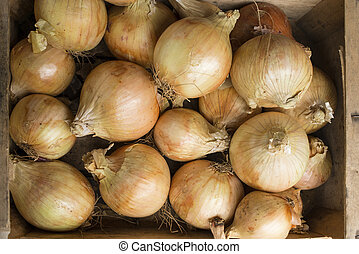 Overhead of Whole Onions in a Wooden Crate