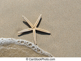 Overhead view of a starfish and wave on a smooth background...
