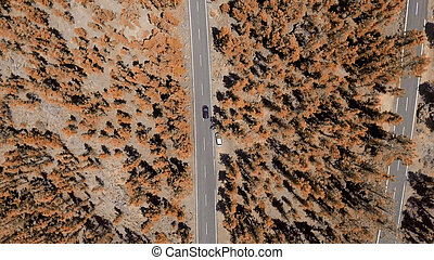 Overhead view of mountain road across forest