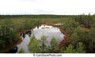 Overhead view of the bog swamp marsh land where you can see...