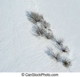 Overhead view of trees and shadows on snow - Trees in winter...