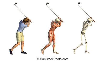 overlays:, anatomisch, spielen golf schwung