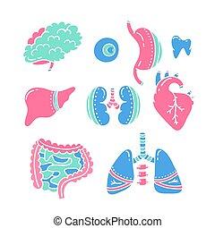 overplanting, inwendige organen, vector, concept, doneren, menselijk