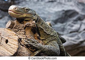 oversized lizard resting on a branch