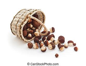 Overturned basket full of cepe mushrooms on white background...