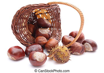 Overturned wicker basket with chestnuts on white background...