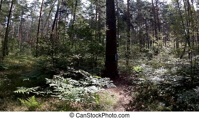 Overview of gym in forest consisting of calisthenics equipment like pullup bar and dip station