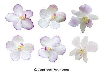 Overview Set Of White Orchid Flowers Isolated On White...