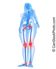3d rendered illustration of a transparency female body with highlighted joints and spine