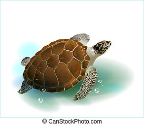 overzeese schildpad, zwemmen, in, de, oceaan
