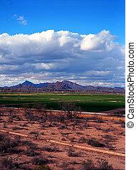 ovest, tucson, arizona
