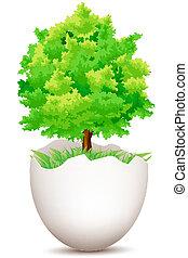 ovo, árvore