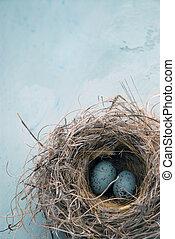 ovos, em, um, ninho