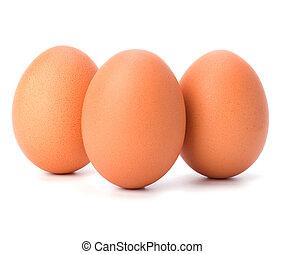 ovos, isolado, branco, fundo
