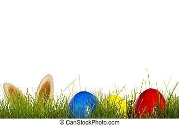 ovos, três, fundo, branca, capim, bunny easter, orelhas