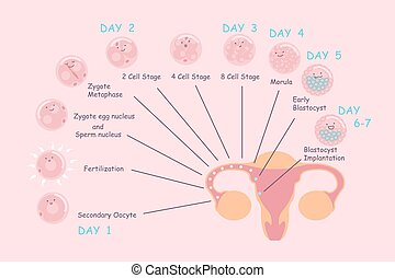 ovum and sperm pregnancy process - cartoon ovum and sperm...