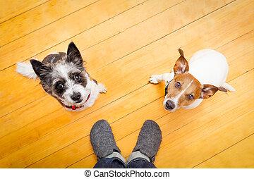 ower, chiens, maison, deux