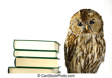 Owl at a book pile