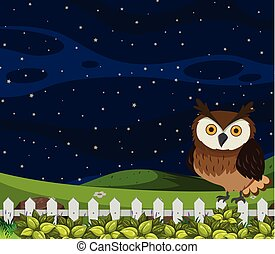 Owl at night scene