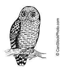 Owl bird engraving vector illustration