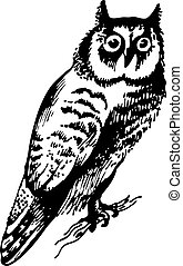 Owl bird, hand-drawn illustration