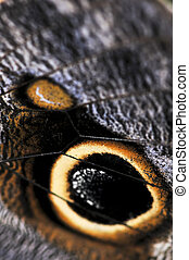 Owl Butterfly wing spots - Extreme closeup of owl butterfly ...