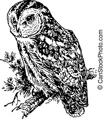 Owl sitting on the branch of the tree