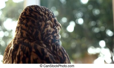 owl close up. owl as a pet against the window