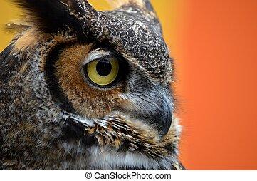 Owl Eye 2