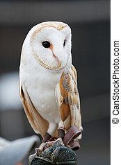 owl II - owl portrait