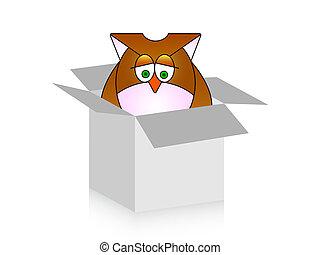 owl in box