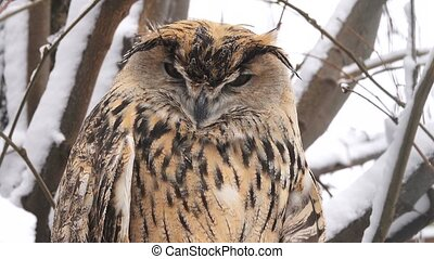 owl in the wood in the winter on tree branches