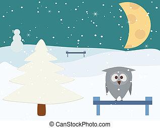 owl in winter night