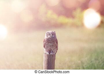 Owl on a field