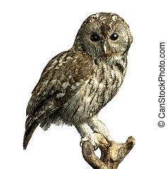 owl on a perch with clipping path - a stuffed owl on a perch...