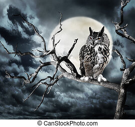 Owl On A Tree At Night