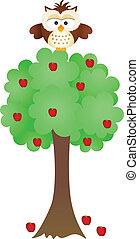 Owl on Apple Tree