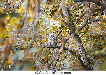 Owl on branch in the forest